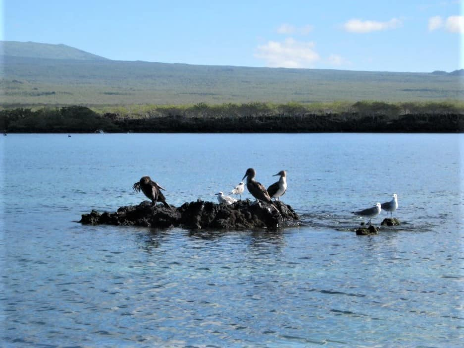 A variety of birds hanging out in the Galapagos waters