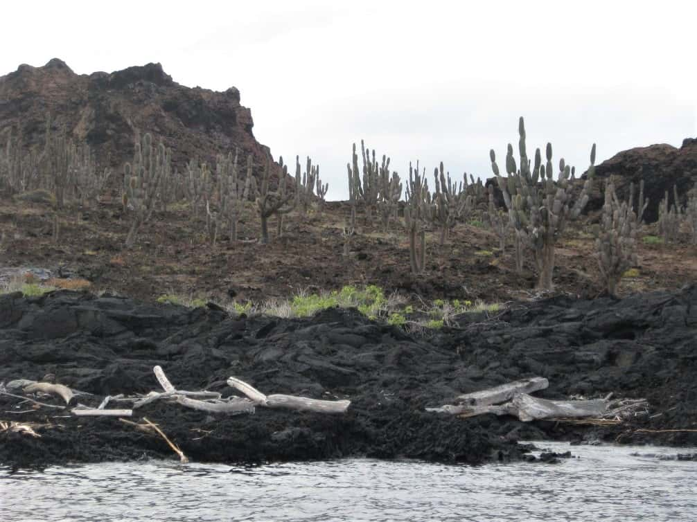 One of the islands we visited in the Galapagos had a prehistoric vibe