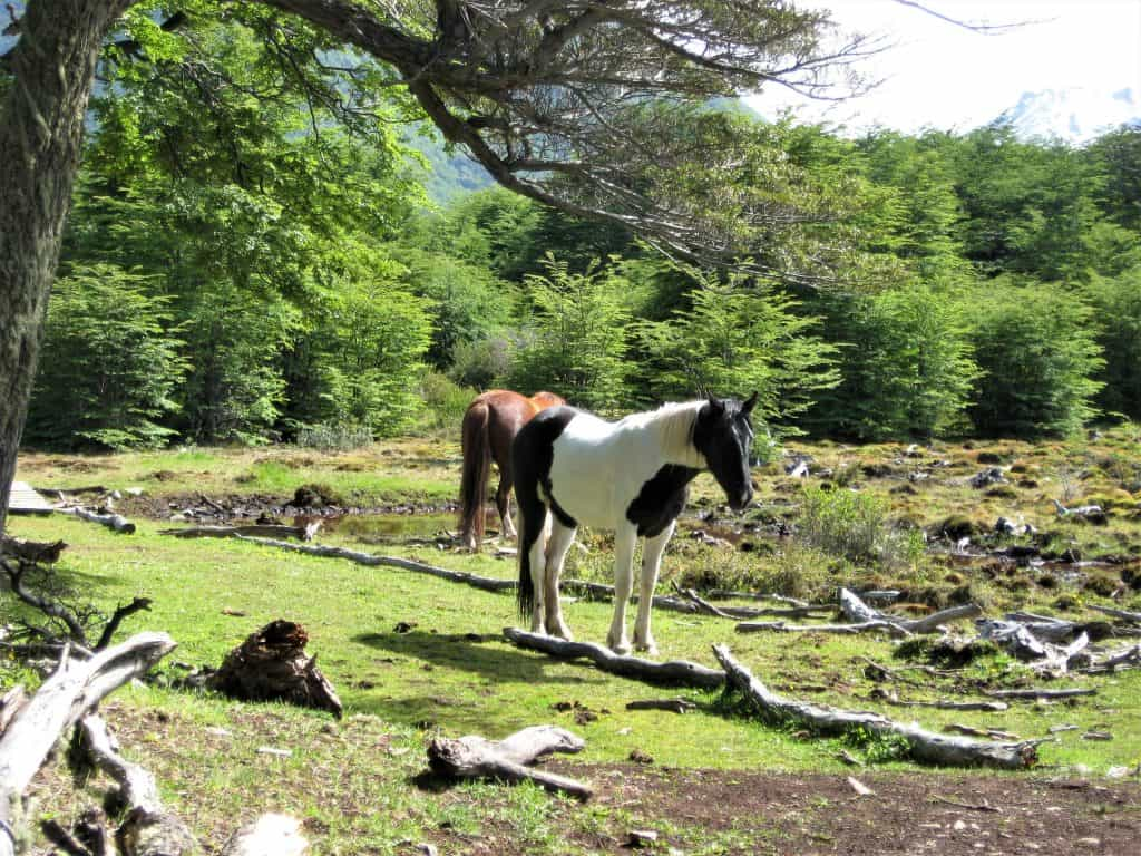 Horses grazing along the trails of the Arakur hotel in Ushuaia