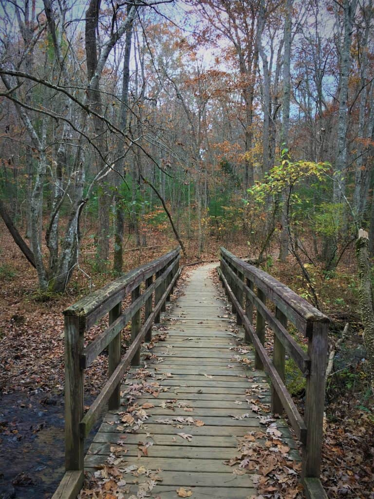 Hiking through Bent Creek wilderness area in Asheville