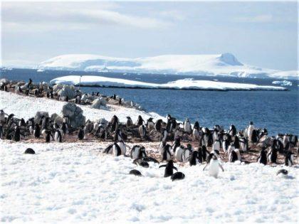 Penguins are everywhere in Antarctica