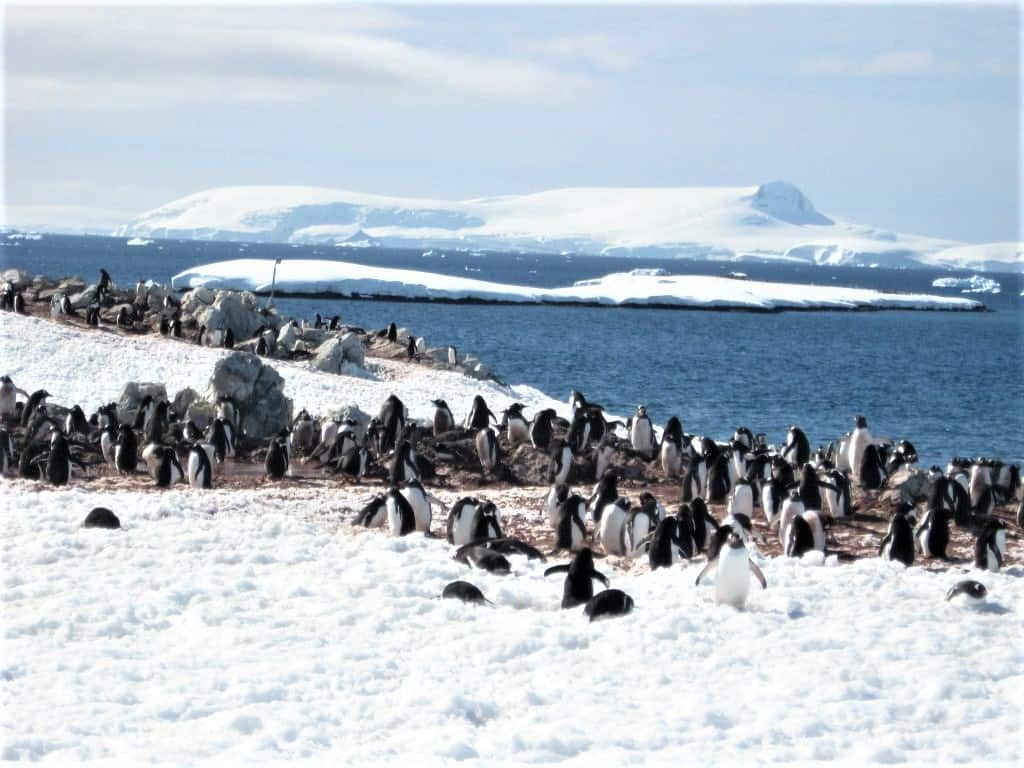 Penguins are everywhere in Antarctica