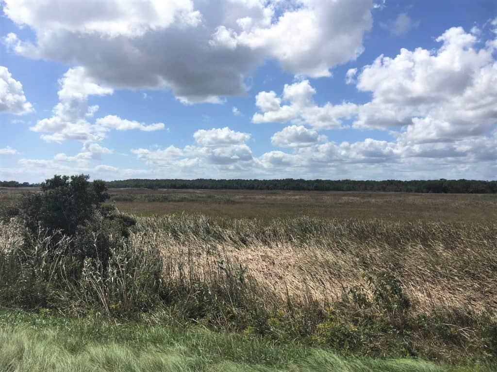 Fields of Back Bay Wildlife Refuge