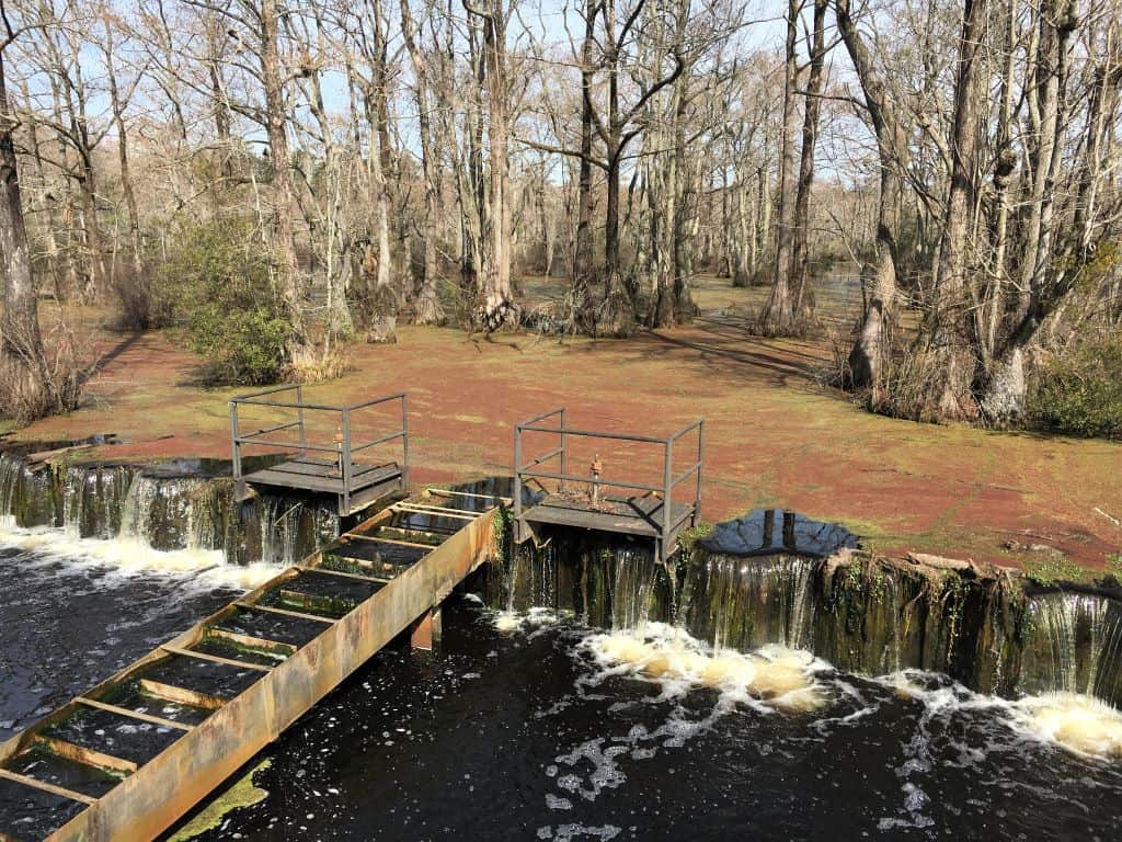 The dam separating Merchants Millpond from the swamp